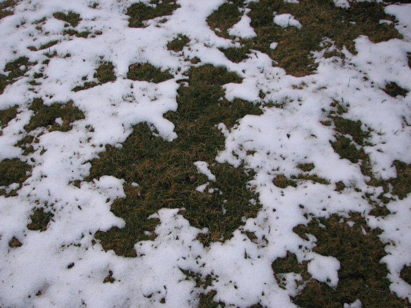 leil.de/di/pics/schlechter_rasen_nach_winter.jpg